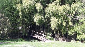 Bambusidylle